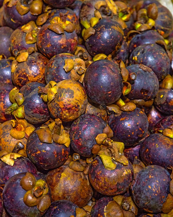 Lots of ripe, beautiful mangosteen lying on the counter. Asia, the tropics are very sweet fruits. stock image