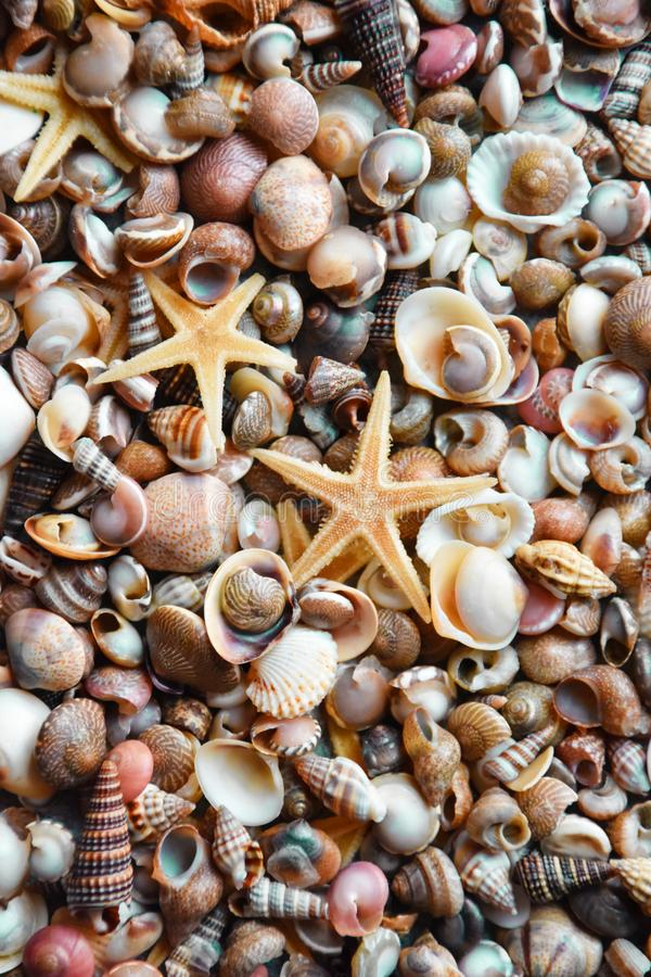 Seashells full frame. Lots of sea shells, different sizes and shapes full frame, vertical royalty free stock image