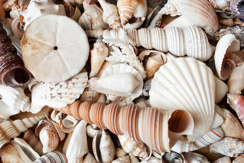 Download Lots of seashells. stock photo. Image of lots, shells - 31684182