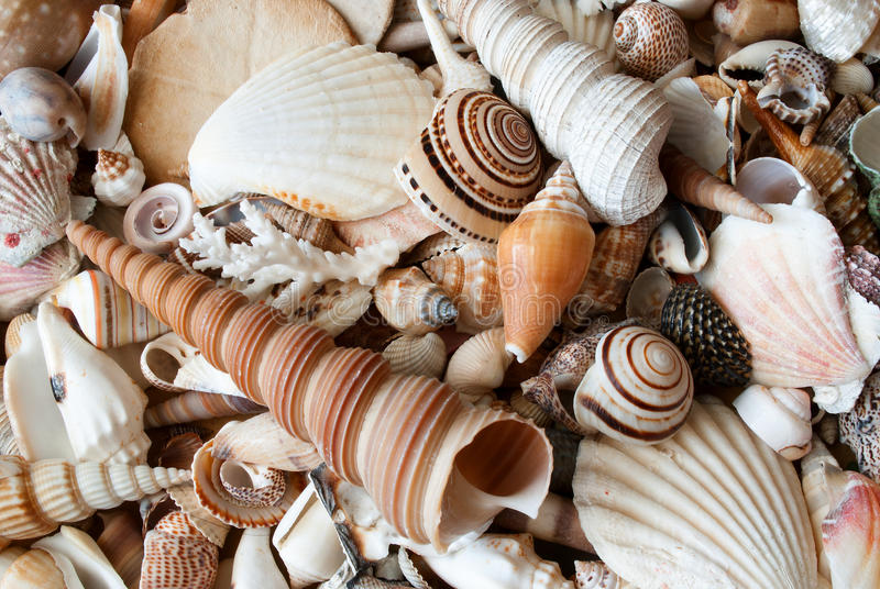 Download Lots of seashells. stock image. Image of relaxation, marine - 31684183