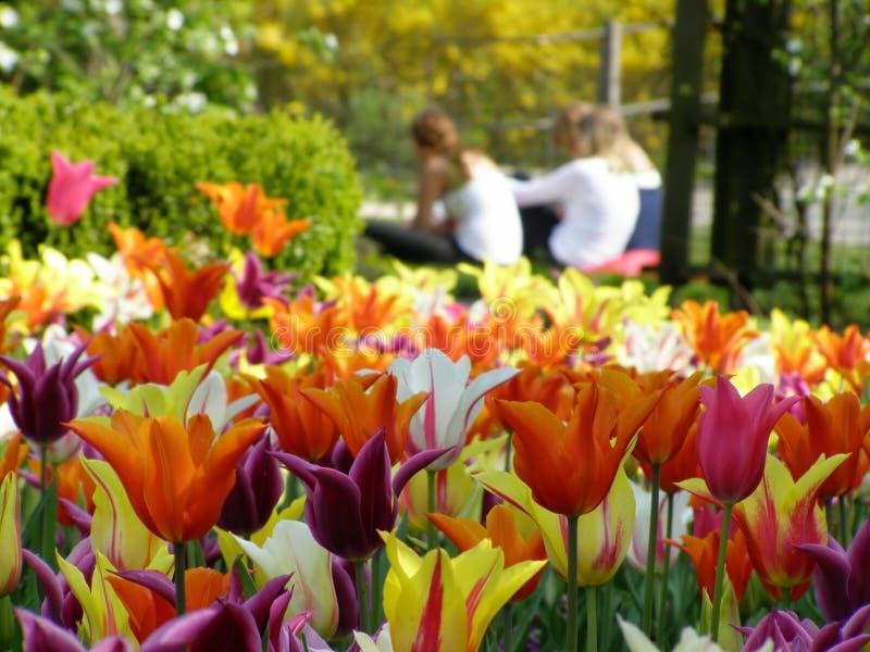 Lots Tulpen stockfotos