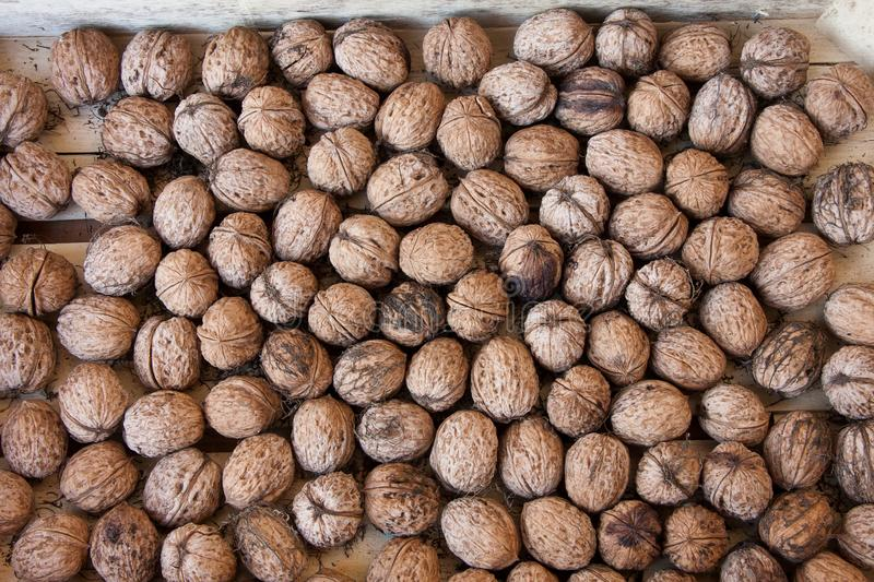 Lots of walnuts are in the plywood box. Lots of inshell walnuts close up in a plywood box, dried in the air stock image