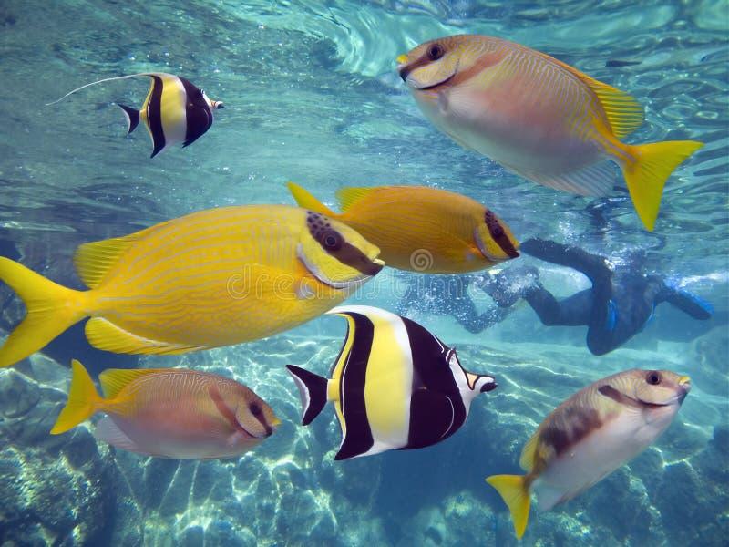 lotsfishes στοκ εικόνες