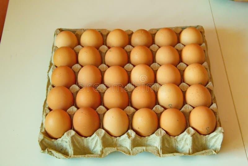 Lott av ägg i rad, perspektivsikt royaltyfri bild