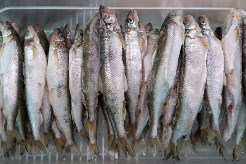Lott av den djupfrysta norsfisken i frys på den havs- marknaden arkivbild
