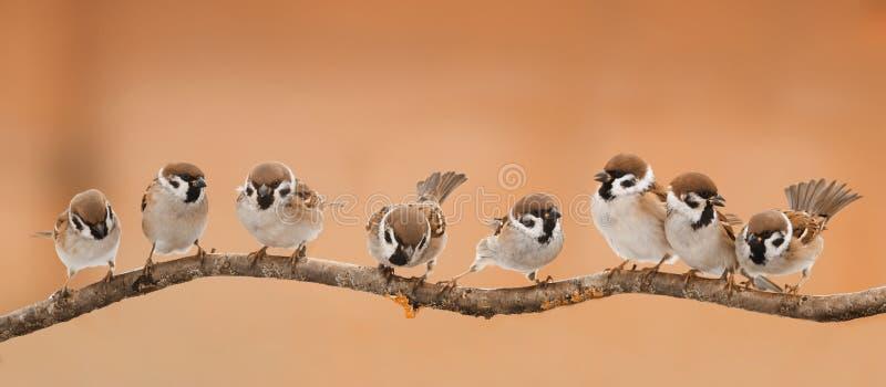 Lott av små roliga fåglar som sitter på en filial arkivbild