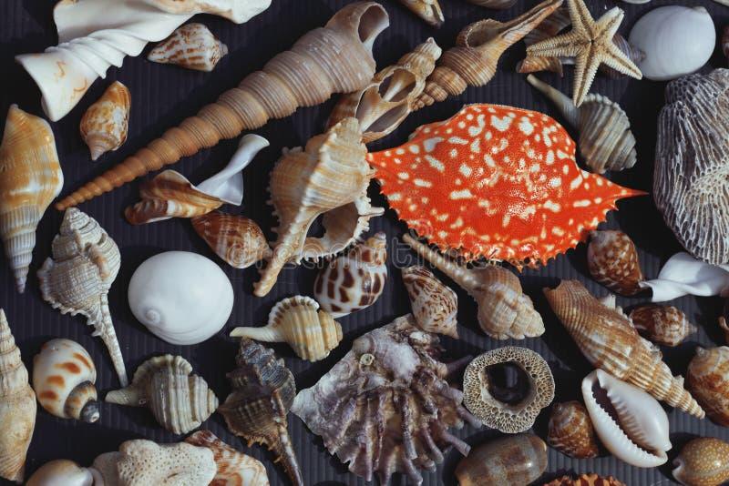 Lott av snäckskal på setout samman med krabban arkivfoto