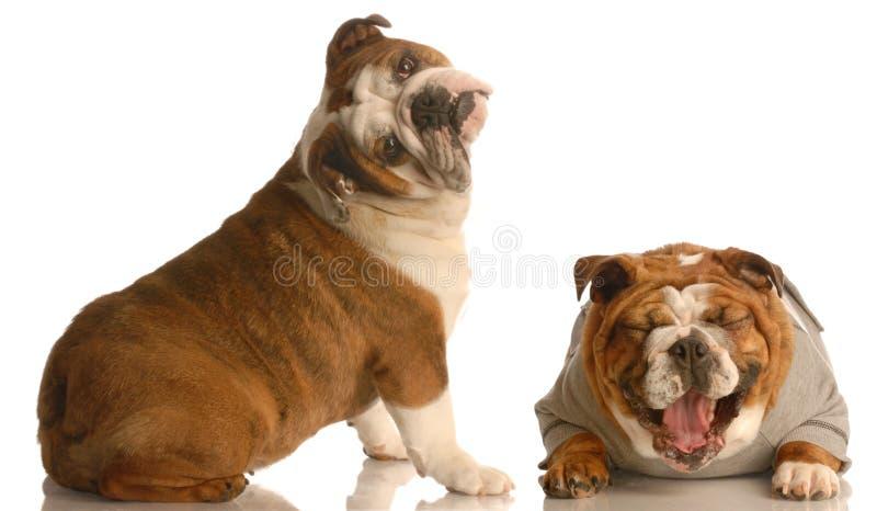Lotta di cane divertente immagine stock libera da diritti