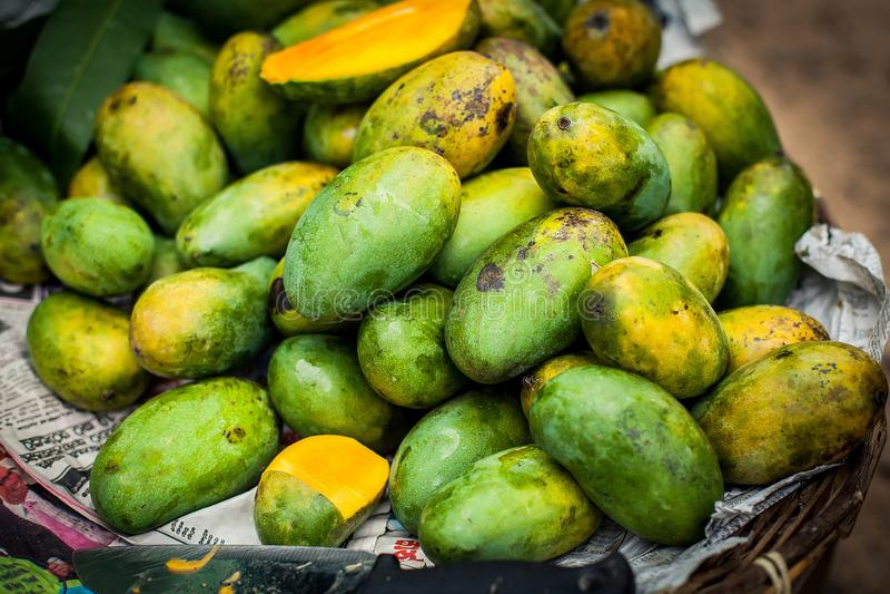 Lotti dei manghi freschi Frutta fresca manghi crescenti Frutti esotici dello Sri Lanka Frutta verde del mango immagini stock