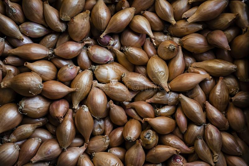 Lotti delle cipolle Cipolle per piantare Cipolle fresche Priorit? bassa delle cipolle Cipolle mature Cipolle nel mercato immagini stock libere da diritti