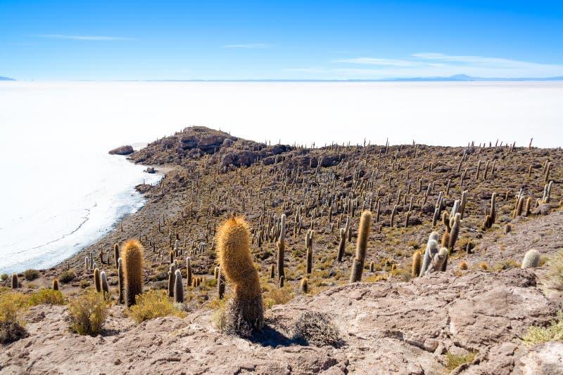 Lotti delle pianure del sale e del cactus fotografia stock