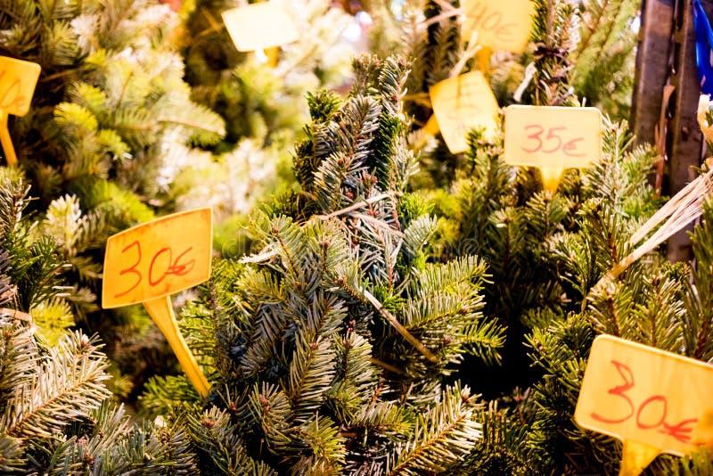 Lotto dei pini verdi di natale da vendere in negozio in via della città alla notte con il prezzo fotografie stock libere da diritti