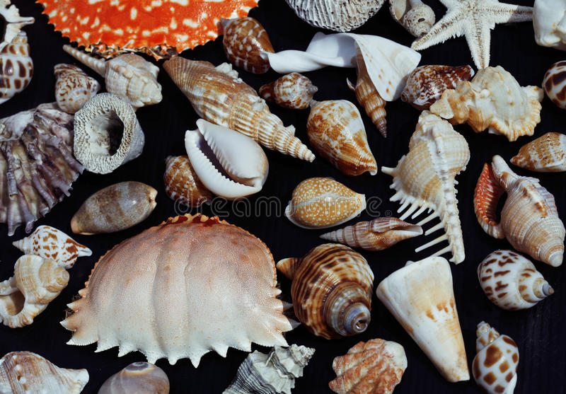 Download Lotto Delle Conchiglie Su Setout Insieme Al Granchio Immagine Stock - Immagine di arte, oceano: 56892801