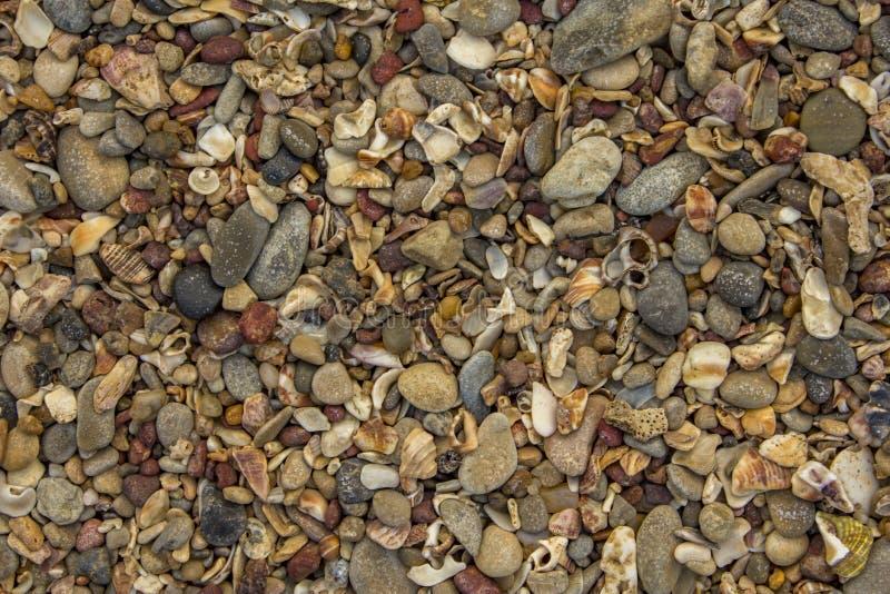 lotto di piccole conchiglie e pietre delle forme differenti, colori e dimensioni, vista superiore struttura naturale di struttura immagini stock