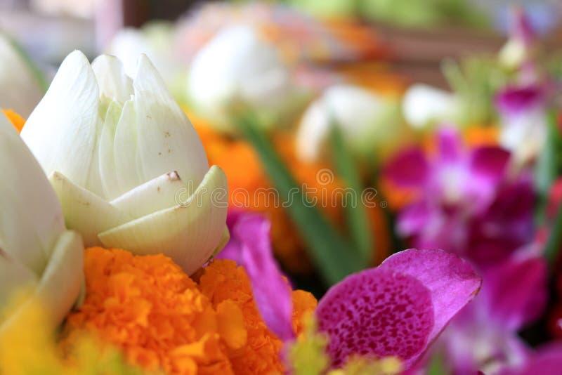 Lotus και οποιαδήποτε λουλούδια για να προσεηθεί στο βουδισμό στοκ φωτογραφία