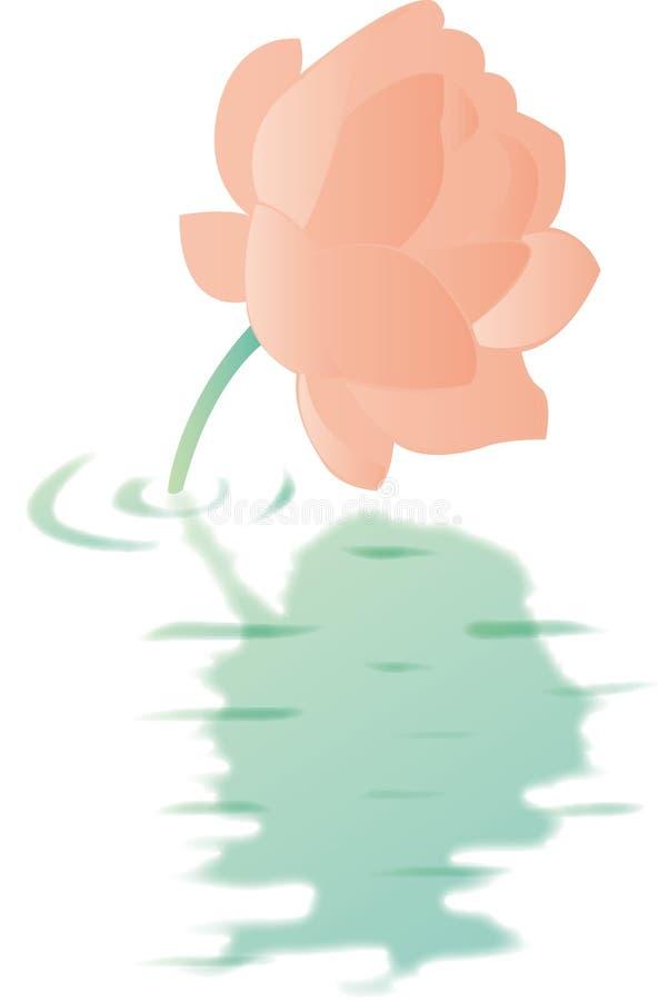 Download Lotus Stock Images - Image: 12107004