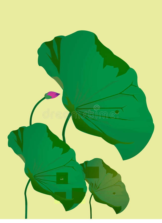 Lotus stock illustration
