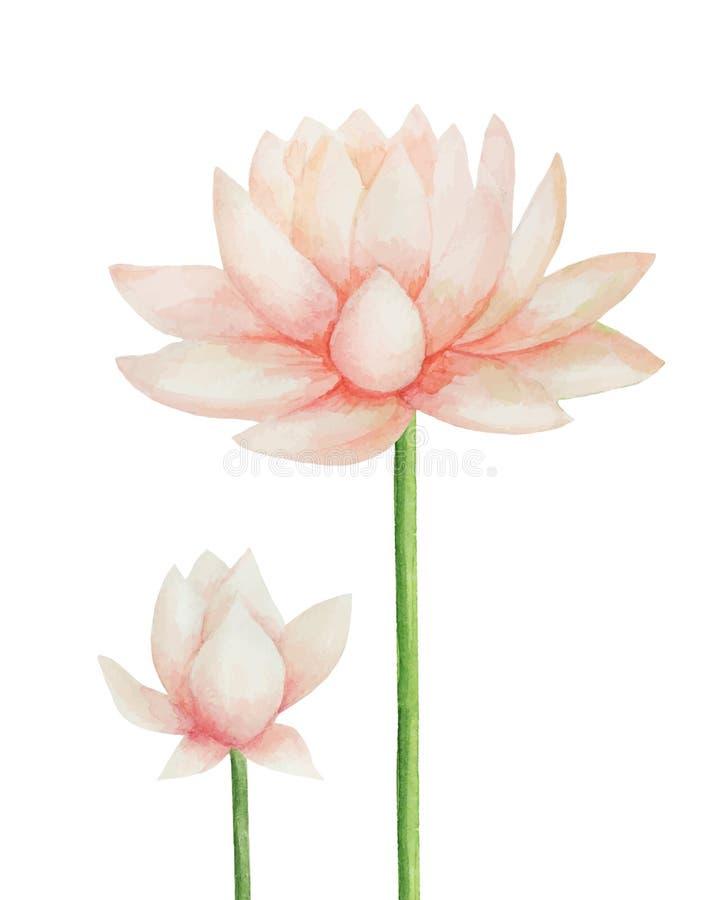 lotus ilustração stock