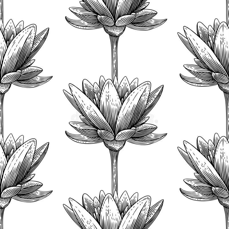 Lotus ilustración del vector