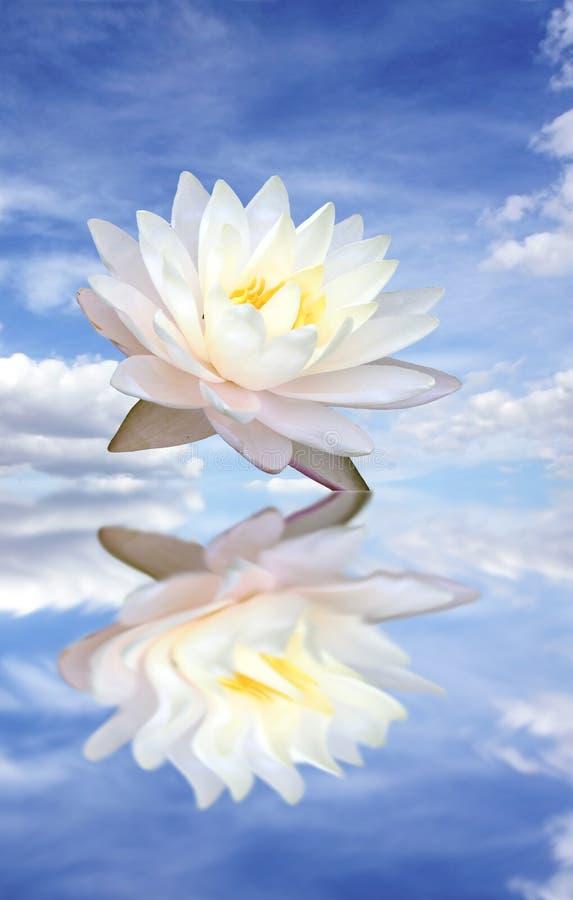 Free Lotus Royalty Free Stock Images - 5196519