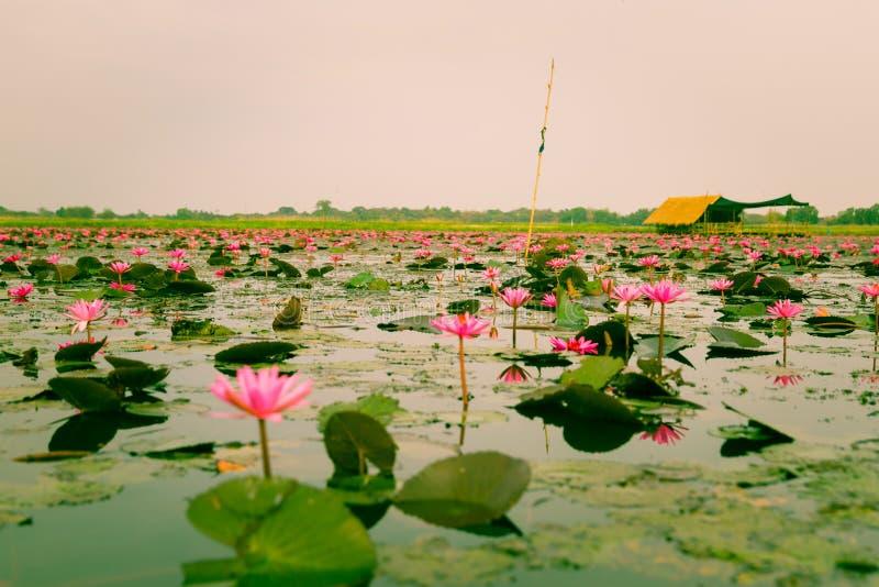 Lotus στοκ φωτογραφίες με δικαίωμα ελεύθερης χρήσης