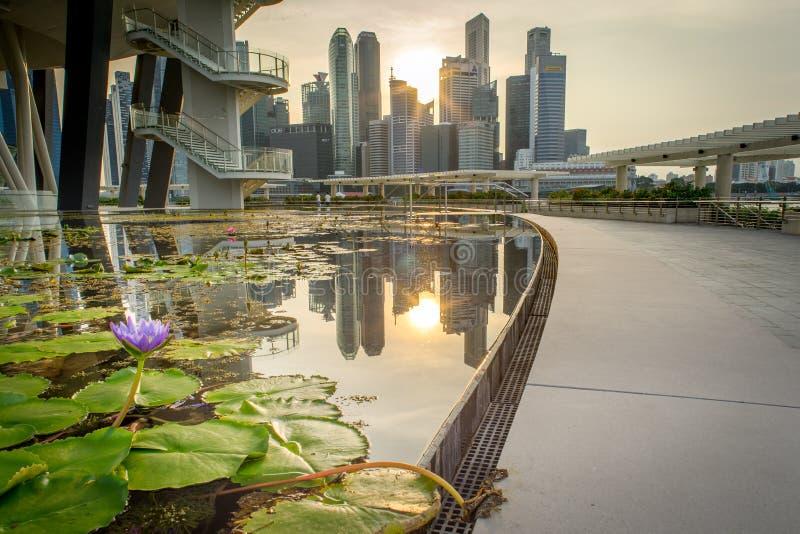 Lotus abaixo de Lotus (Art Science Museum) foto de stock royalty free