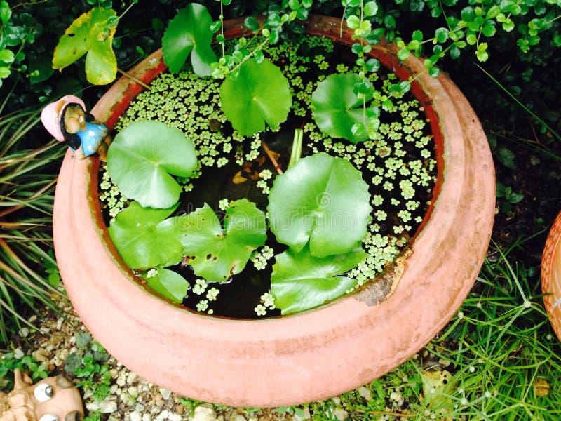 Lotus auf Wasser stockfotografie