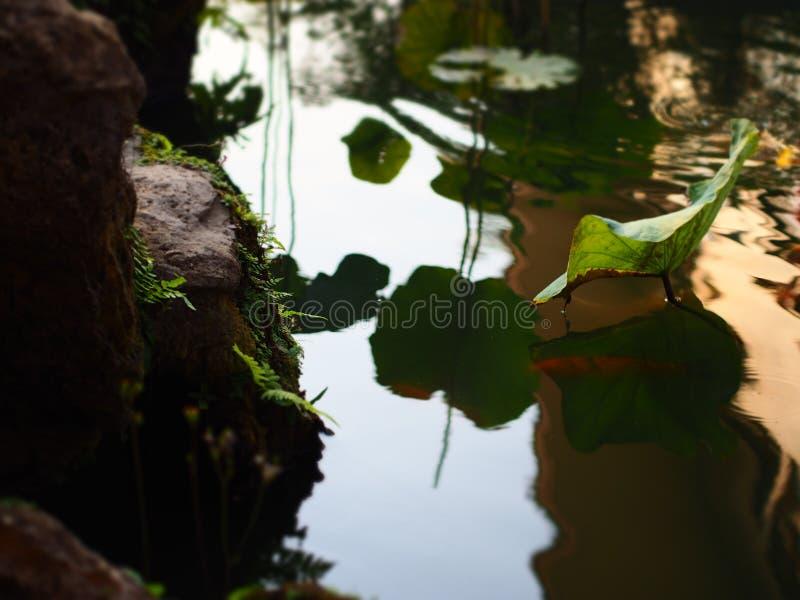 stream stock image