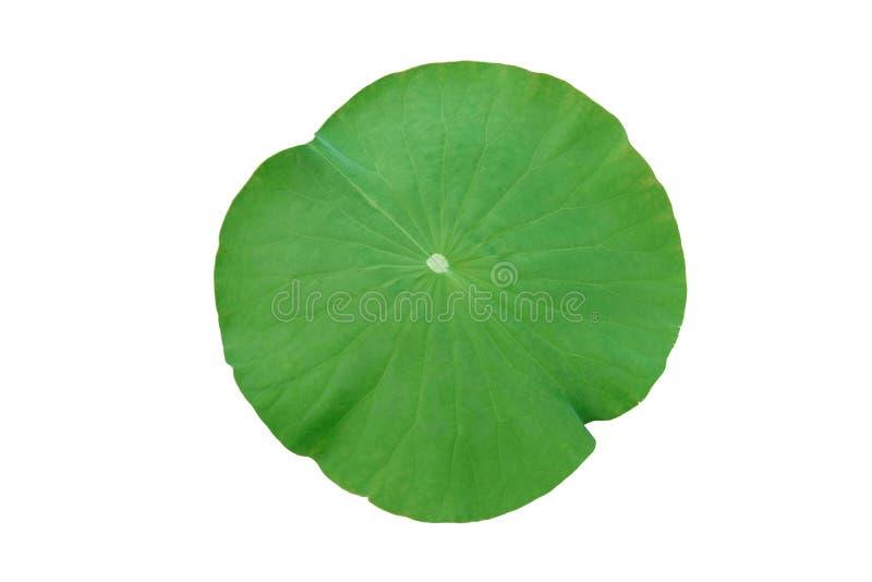 Lotus-blad op witte achtergrond wordt geïsoleerd die stock foto's