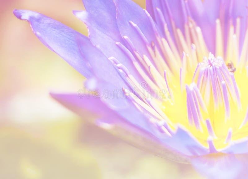 Lotus bleu rougeoyant lumineux de bloosom en gros plan images stock