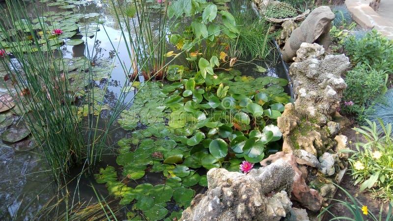 Lotus-bloemen in tuinmeer royalty-vrije stock afbeelding