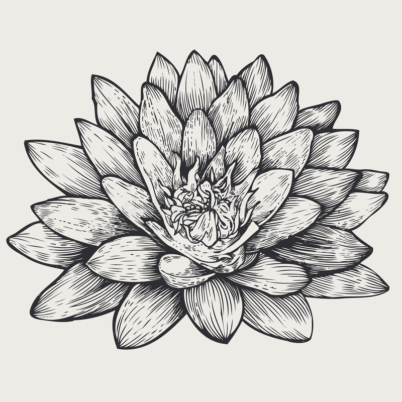 Lotus, bloemenontwerpelement, stock foto's