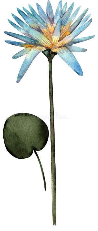 Lotus-bloemwaterverf en blad stock illustratie