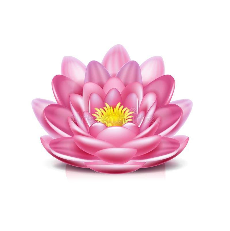 Lotus blomma som isoleras på vit vektor illustrationer