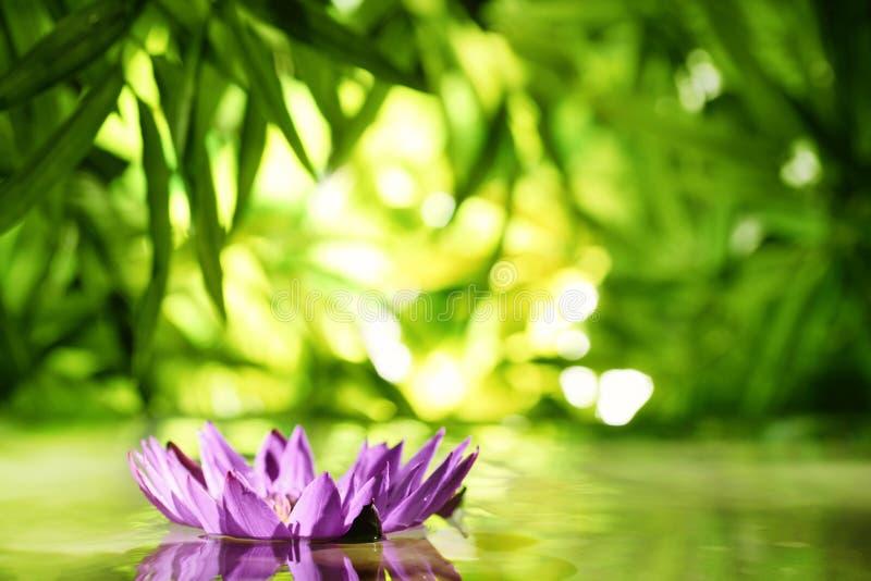 Lotus-Blume, die auf Wasser schwimmt lizenzfreie stockfotos
