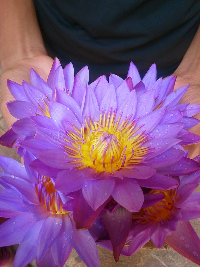 Lotus-Blume an Hand mit Wassertropfen lizenzfreies stockbild