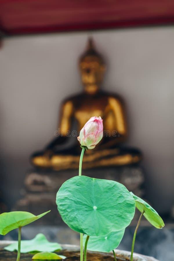 Lotus-Blume in Thailand-Kloster mit buddah Statuenhintergrund stockbild