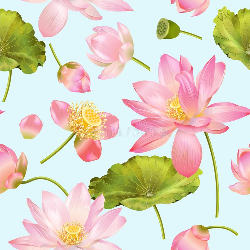 Lotus-Blumenmuster lizenzfreie abbildung