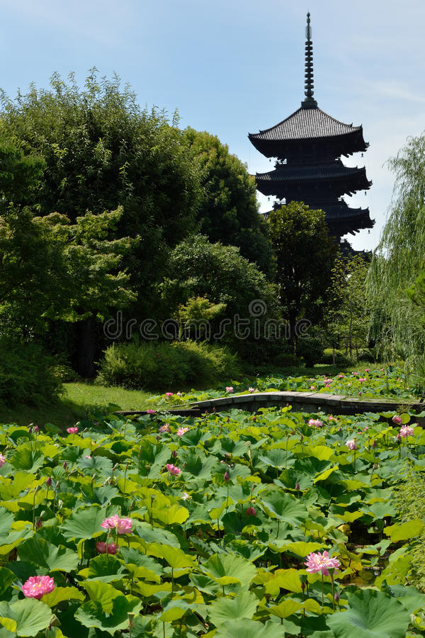 Lotus and buddhist tower in Japan. Lotus pond and buddhist tower of Toji in Kyoto, JAPAN. This temple was registered as a UNESCO world heritage site in 1994 royalty free stock photography