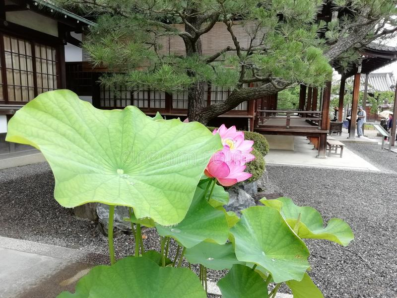 Lotus Byodoin Phoenix Hall, Kyoto, Japan royaltyfri bild