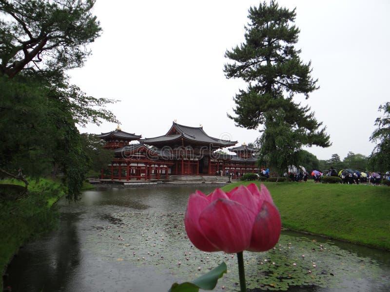 Lotus, Byodoin Phoenix Hall, Kyoto, Japon image stock