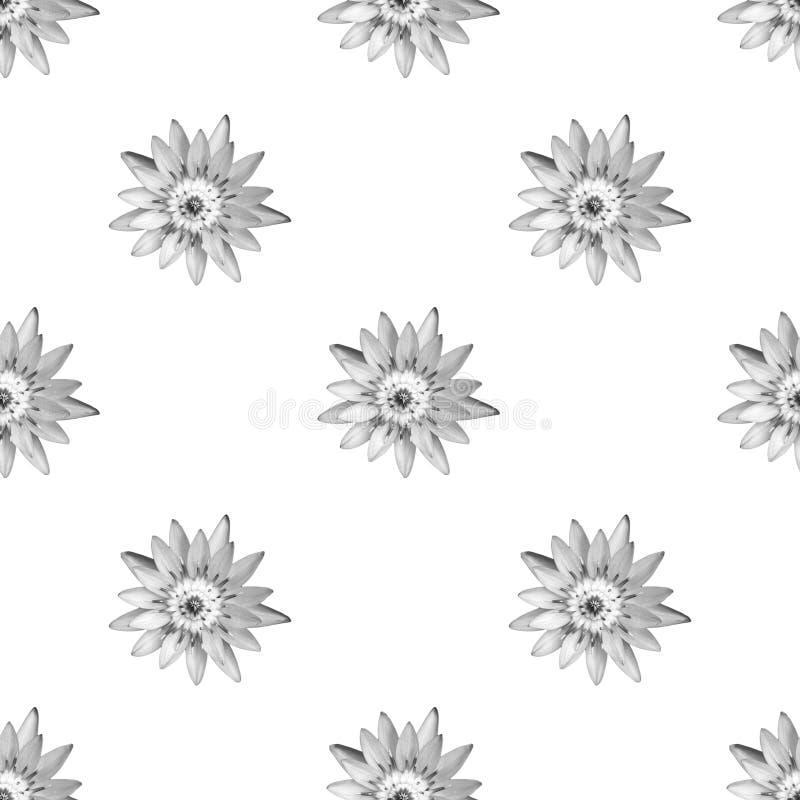 Lotus com monotone preto e branco como papel de parede sem costura em branco foto de stock royalty free