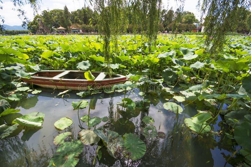 Lotus com o barco da cauda longa fotografia de stock