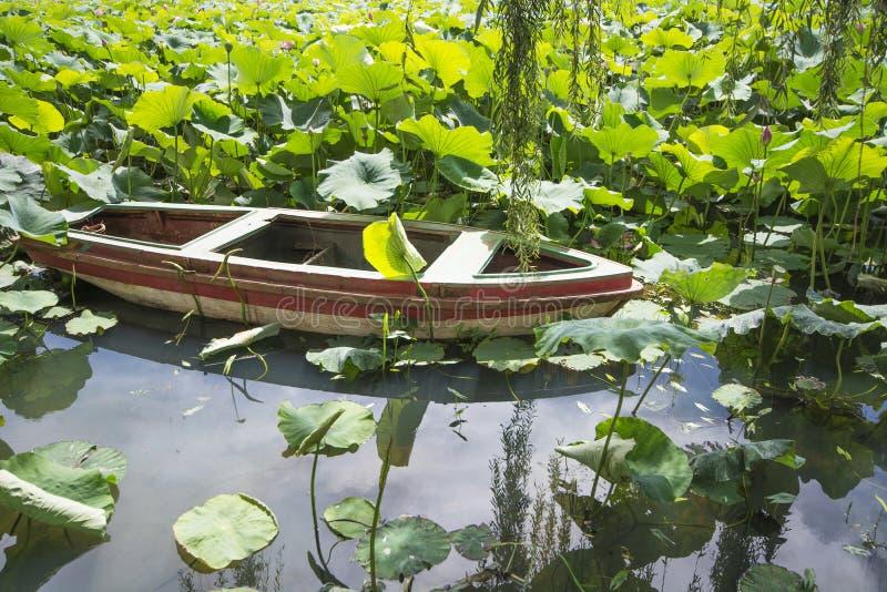 Lotus com o barco da cauda longa foto de stock royalty free