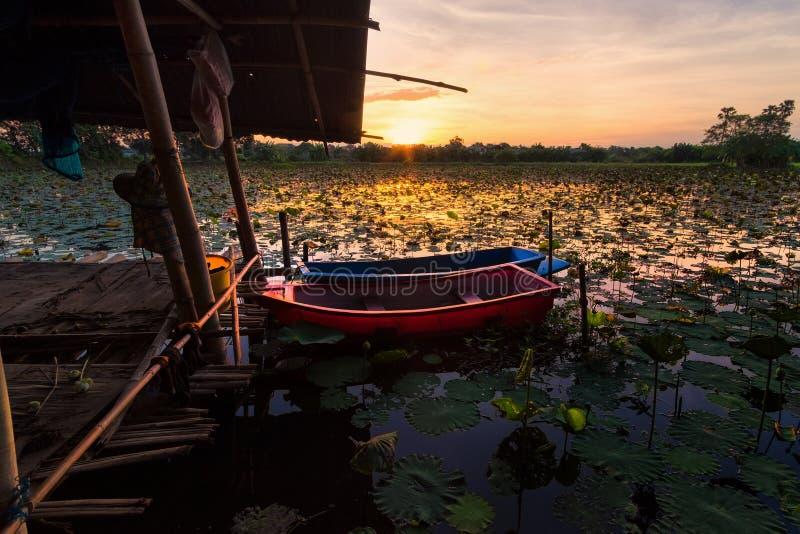 Lotus damm på gryning royaltyfri bild