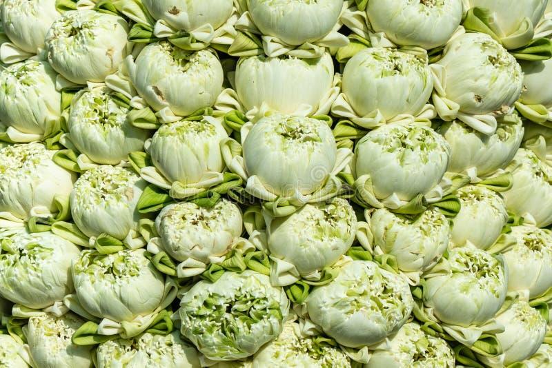 Lotus dat de bloemblaadjes gevouwen zijn stock afbeelding
