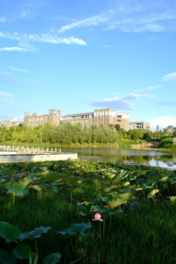Lotus e apartamento imagens de stock