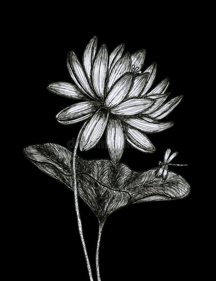 Lotus en el fondo negro foto de archivo libre de regalías