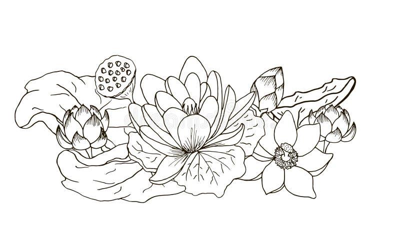 Lotus en sammansättning av blommor och sidor Svartvit översikt royaltyfri illustrationer