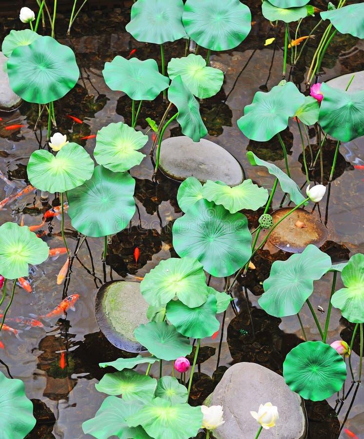 Lotus et koi images stock